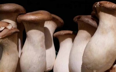 Health Benefits Of Raw Mushrooms