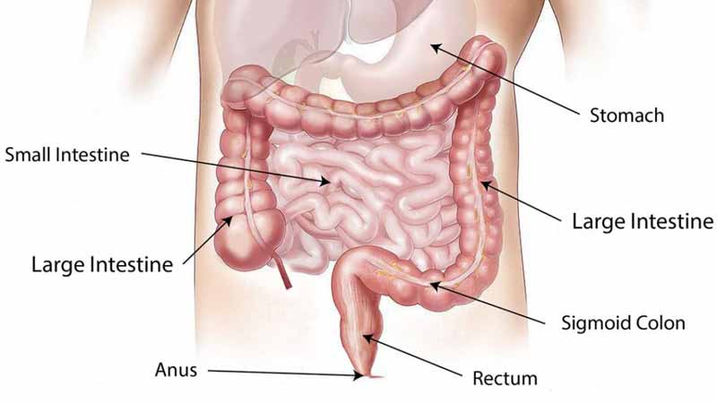 What Is Colon Hydrotherapy?
