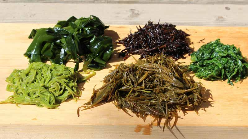 How Can I Eat Seaweed Everyday?