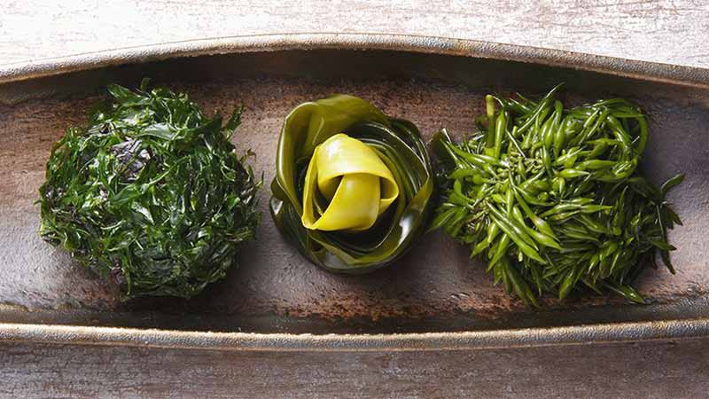 What are the Benefits of Dried Seaweed?