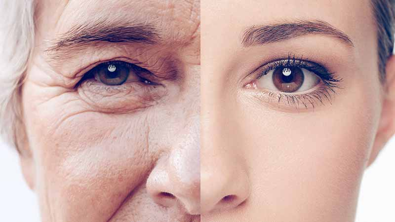 What are the Seaweed Collagen Benefits?