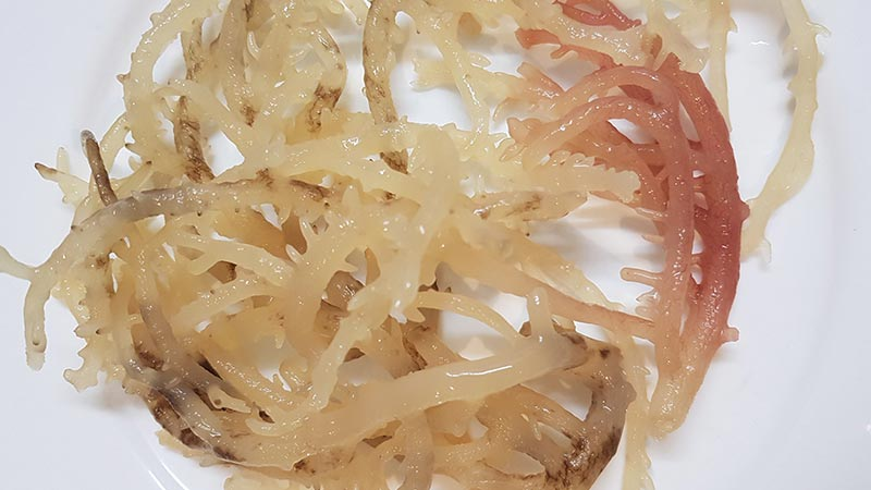 Eating Seaweed Is Sea Moss Good For You - www.detoxandcure.com