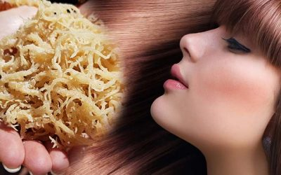 Sea Moss Benefits For Hair and Skin Health